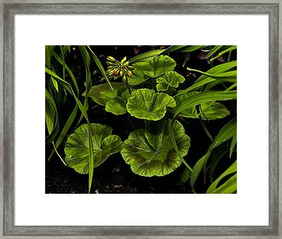 New Growth Framed Print by David Marr