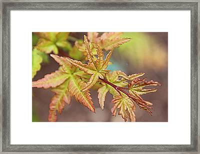 New Growth Framed Print by Sarah E Kohara