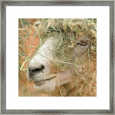 New Hair Style Framed Print by Art Block Collections