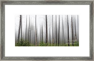 New Jersey Pine Barrens Framed Print by Tom Gari Gallery-Three-Photography