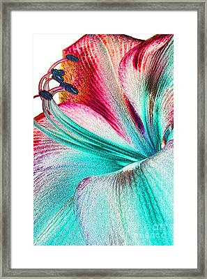 Framed Print featuring the digital art New Kid In Town by Margie Chapman