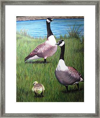 New Kid On The Block Framed Print by Michelle Harrington