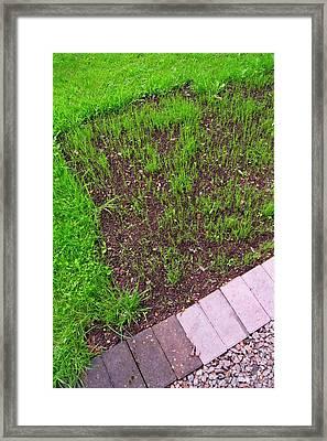 New Lawn. Framed Print