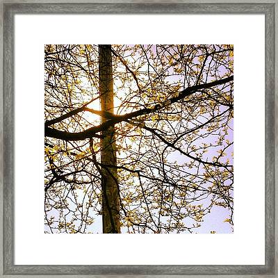 New Leaves  Framed Print