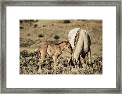 New Life 2013 Framed Print
