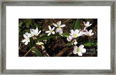 Framed Print featuring the photograph Tiny Works Of Art by Janice Westerberg