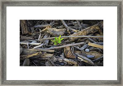 New Life Framed Print by Aged Pixel