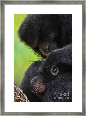 New Life Framed Print by Ashley Vincent