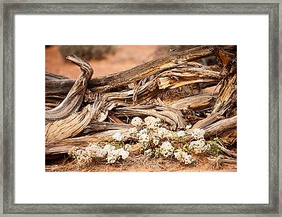 New Life Grows Framed Print by Randy Giesbrecht
