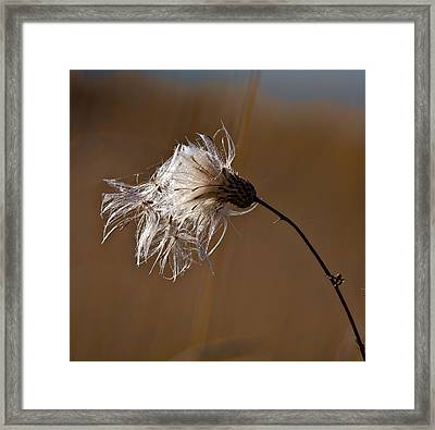 New Life Is Comming Framed Print