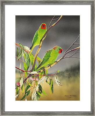 New Life - Little Lorikeets Framed Print