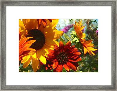 New Mexico Summer Sunflower Garden Framed Print