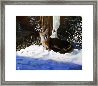 New Mexico Swift Fox Framed Print