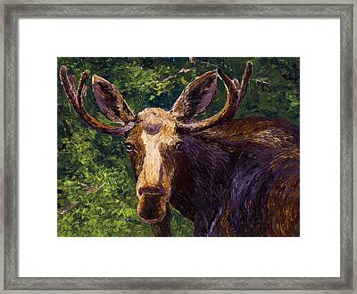 Loose Moose Framed Print by Mary Giacomini