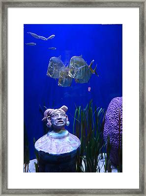 New Orleans Aquarium Framed Print