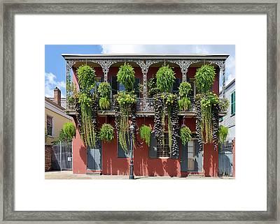 New Orleans City Jungle Framed Print by Christine Till