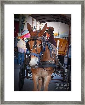 New Orleans Mule Carraige Framed Print by Jeanne  Woods