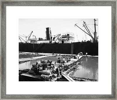 New Orleans Shipping, 1903 Framed Print by Granger