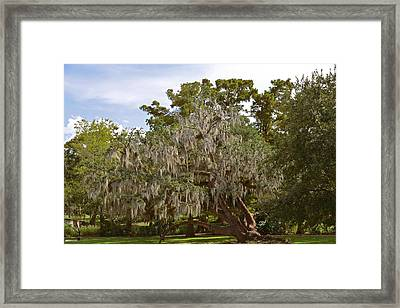 New Orleans Spanish Moss Framed Print by Christine Till