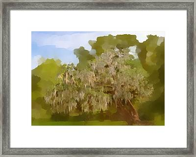 New Orleans Spanish Moss On Live Oaks Framed Print