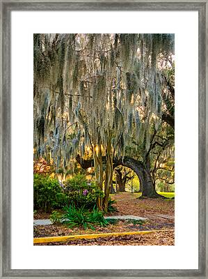New Orleans - Spanish Moss Framed Print by Steve Harrington