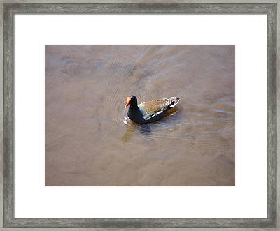 New Orleans - Swamp Boat Ride - 1212111 Framed Print by DC Photographer