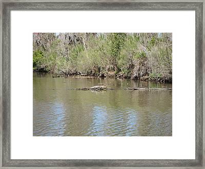 New Orleans - Swamp Boat Ride - 1212158 Framed Print