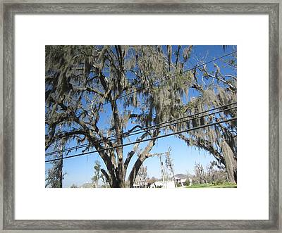 New Orleans - Swamp Boat Ride - 12122 Framed Print by DC Photographer