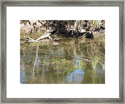 New Orleans - Swamp Boat Ride - 121251 Framed Print by DC Photographer