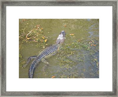 New Orleans - Swamp Boat Ride - 121258 Framed Print by DC Photographer