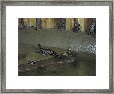 New Orleans - Swamp Boat Ride - 12126 Framed Print by DC Photographer