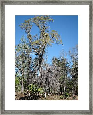 New Orleans - Swamp Boat Ride - 121265 Framed Print by DC Photographer