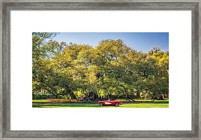 New Orleans - Tree Of Life 3 Framed Print by Steve Harrington