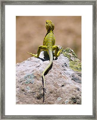 New Photographic Art Print For Sale Lizard Back Ghost Ranch New Mexico Framed Print