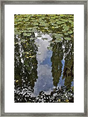 Reflections Amongst The Lily Pads Framed Print