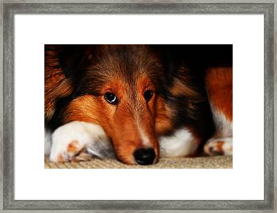 New Puppy Framed Print by Cortland Cronk