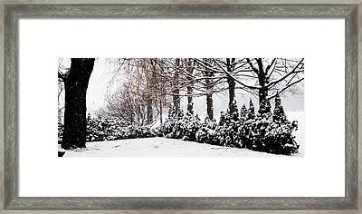 New Snow - Evergreens Framed Print by Jacqueline M Lewis