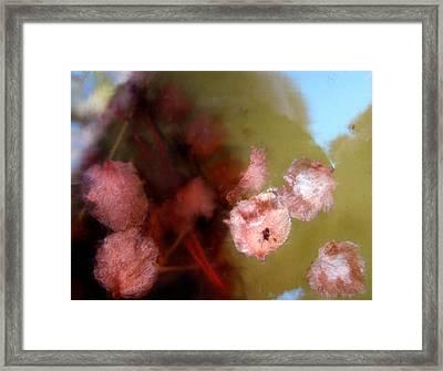 Caos Framed Print