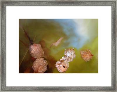 New Start   Framed Print