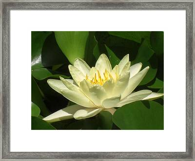 New Start Framed Print by John Wilson