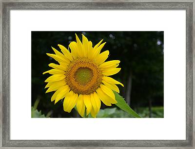 New Sun Framed Print