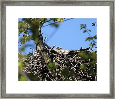 New Surroundings Framed Print