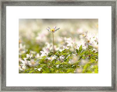 Framed Print featuring the photograph New Time Springtime by Rose-Maries Pictures
