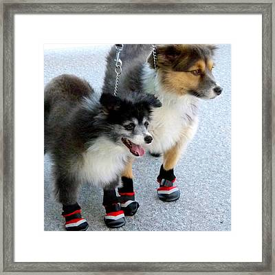 New Winter Boots Framed Print