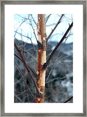 New York Bark Framed Print by Stephen Richards