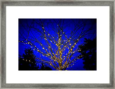 Framed Print featuring the photograph New York Botanical Garden Holiday Tree by Aurelio Zucco