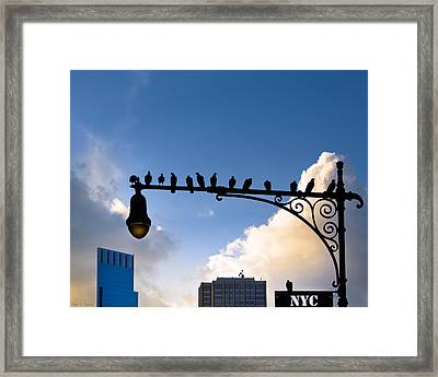 New York City Is For The Birds Framed Print by Mark E Tisdale