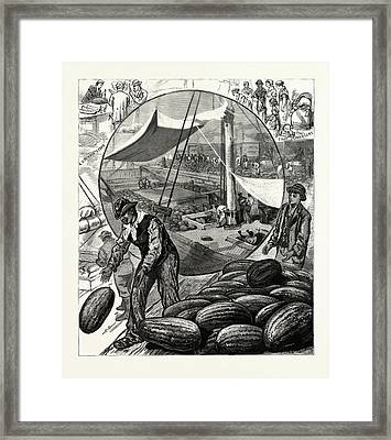 New York Incidents Of The Watermelon Trade In The Metropolis Framed Print by American School