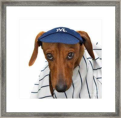 New York Yankee Hotdog Framed Print