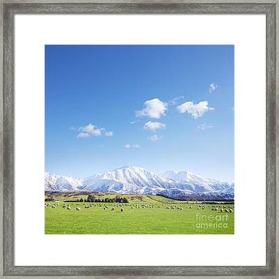 New Zealand Farmland Square Framed Print